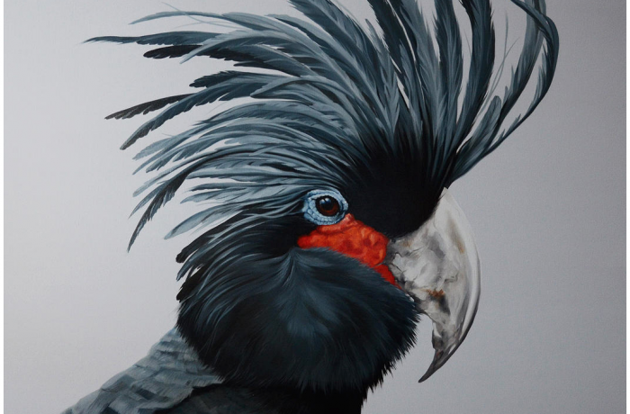 Palm Cockatoo 40×40