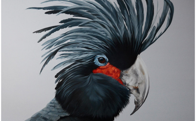 Melissa Del Pinto – Palm Cockatoo 40×40