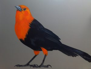 Melissa Del Pinto - Scarlet headed Blackbird 36x48